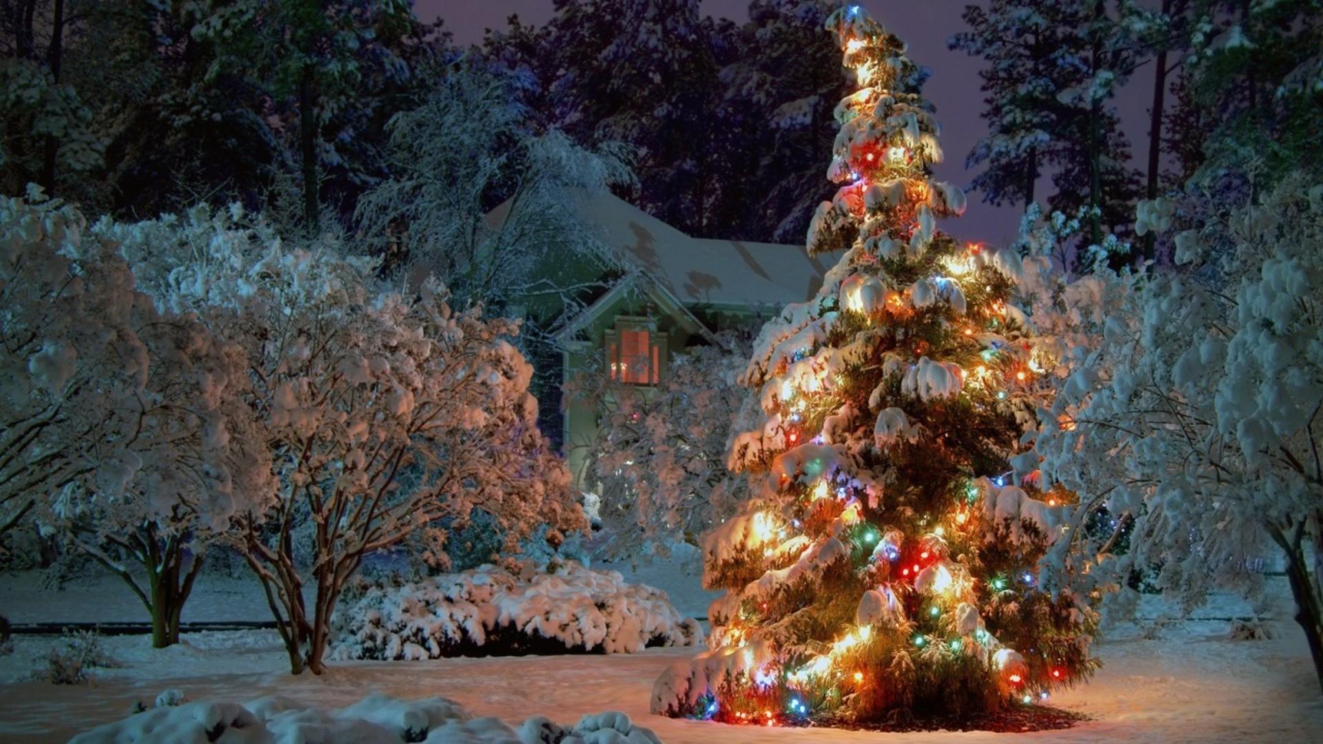 christmas tree christmas lights desktop wallpapers for free