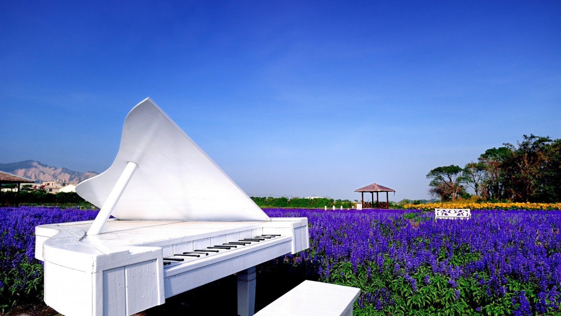 musical instruments summer sky nature outdoors flower travel