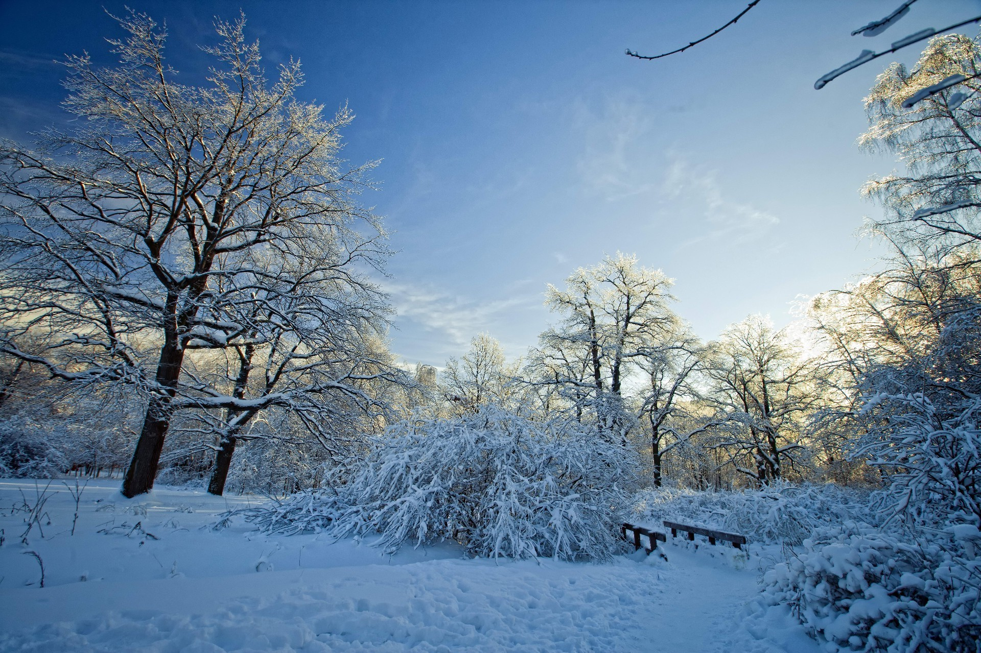 winter snow frost cold tree frozen wood landscape ice weather season branch snow-white scenic frosty nature fair weather icy scene