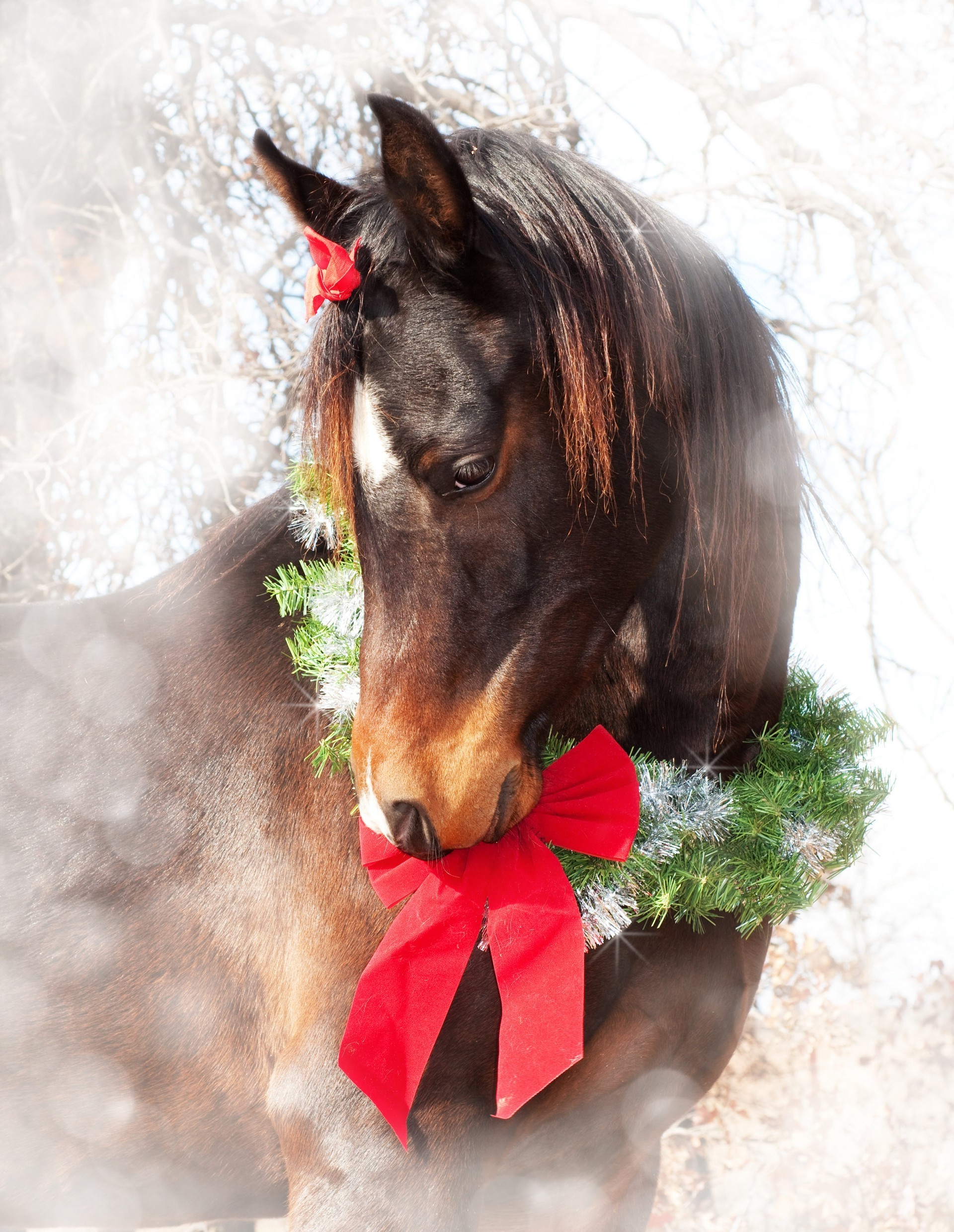 Horse with Christmas wreath