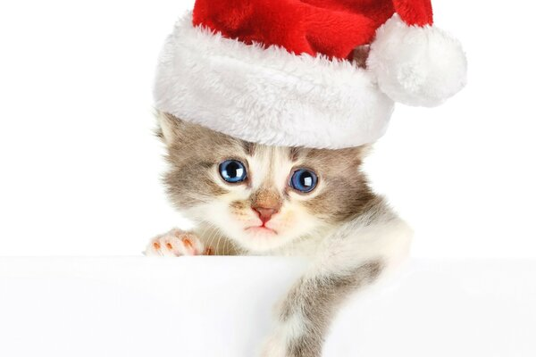 Little Christmas kitten