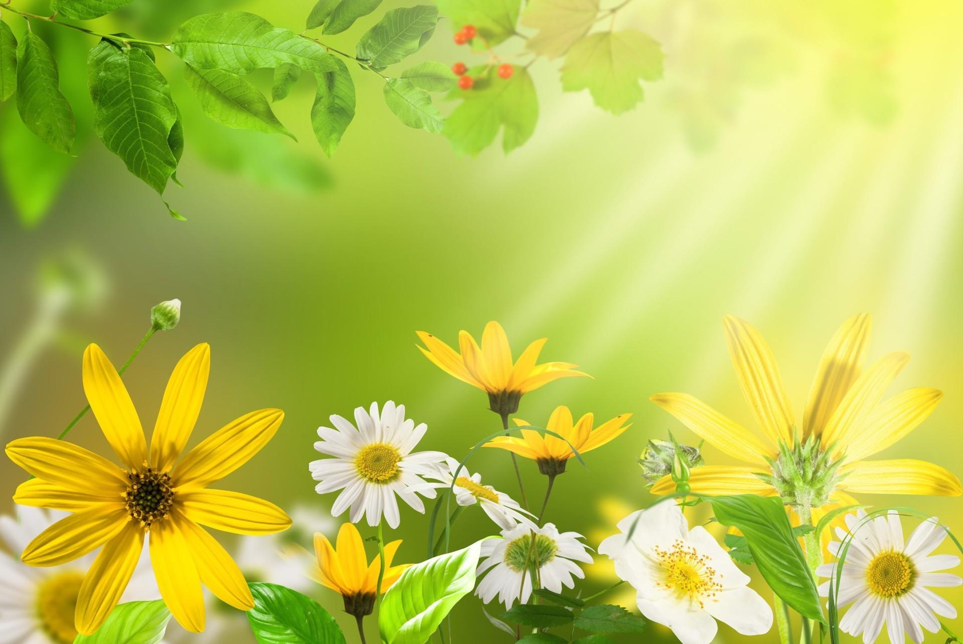 природа цветы листья  № 2053435 без смс