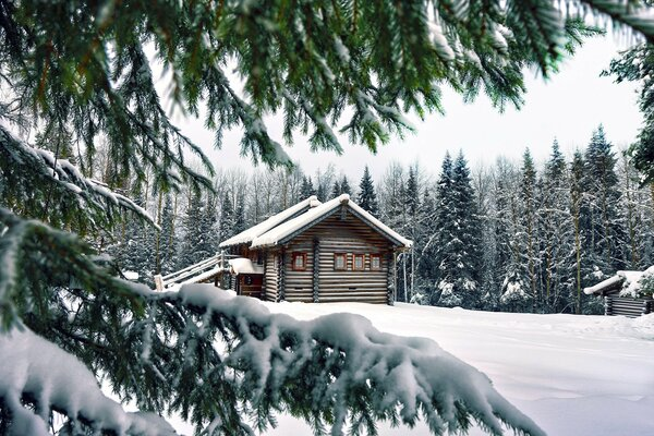 Log hut among snow-covered spruce forest