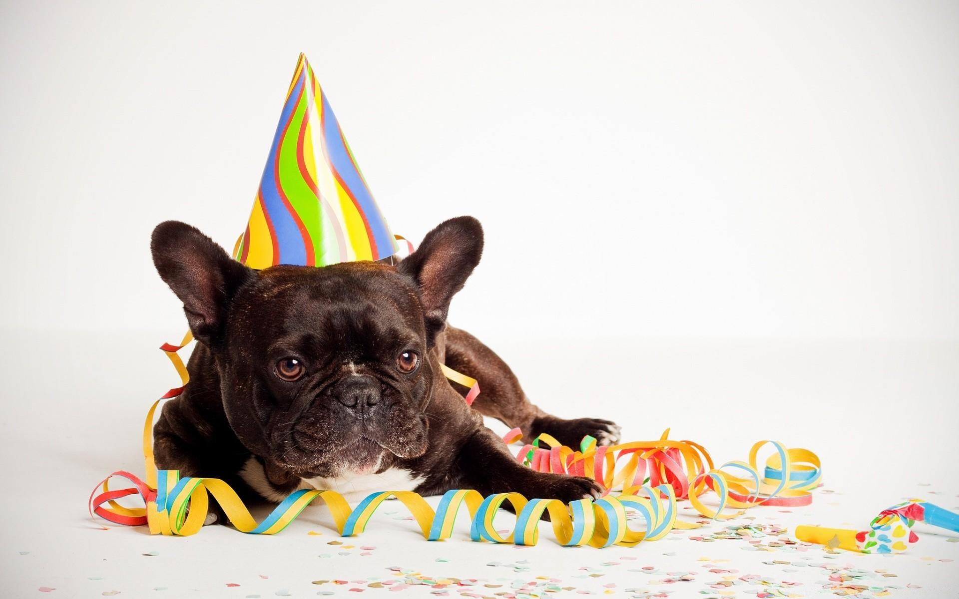 Животные с днем рождения открытка