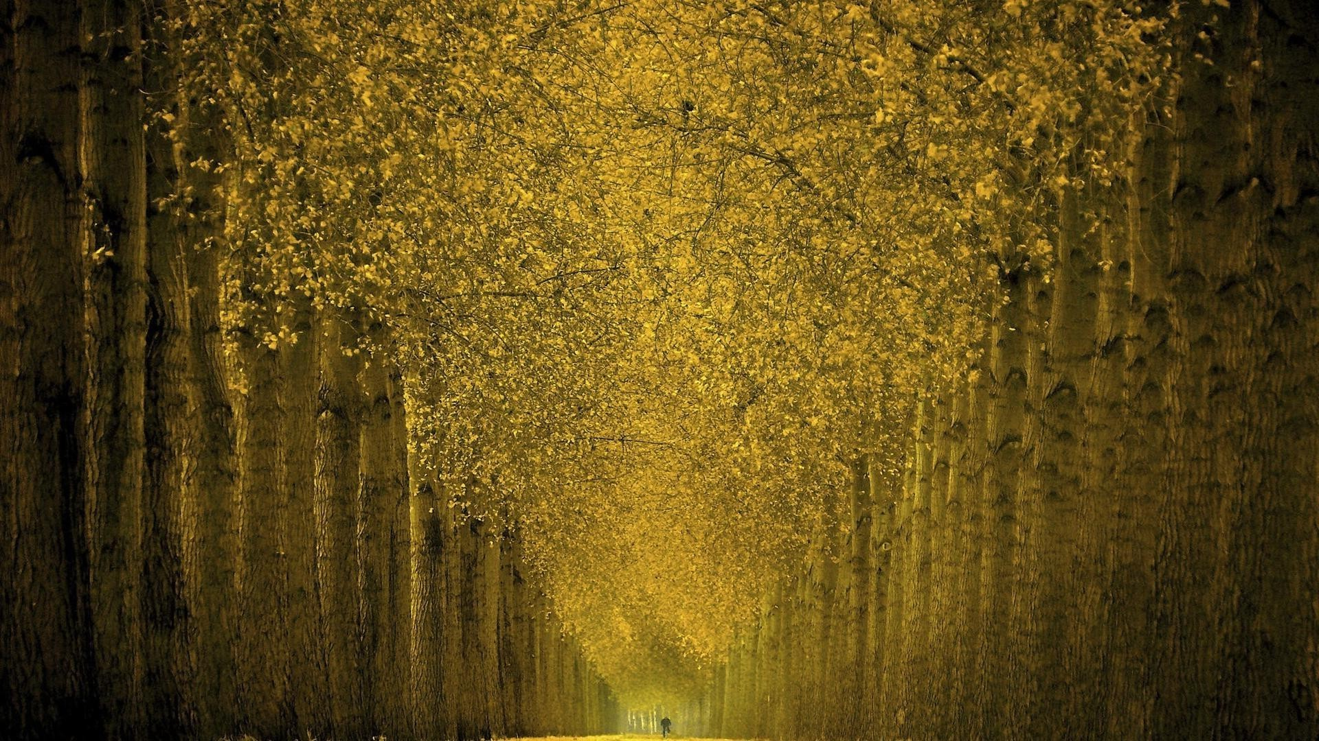 The Golden alley