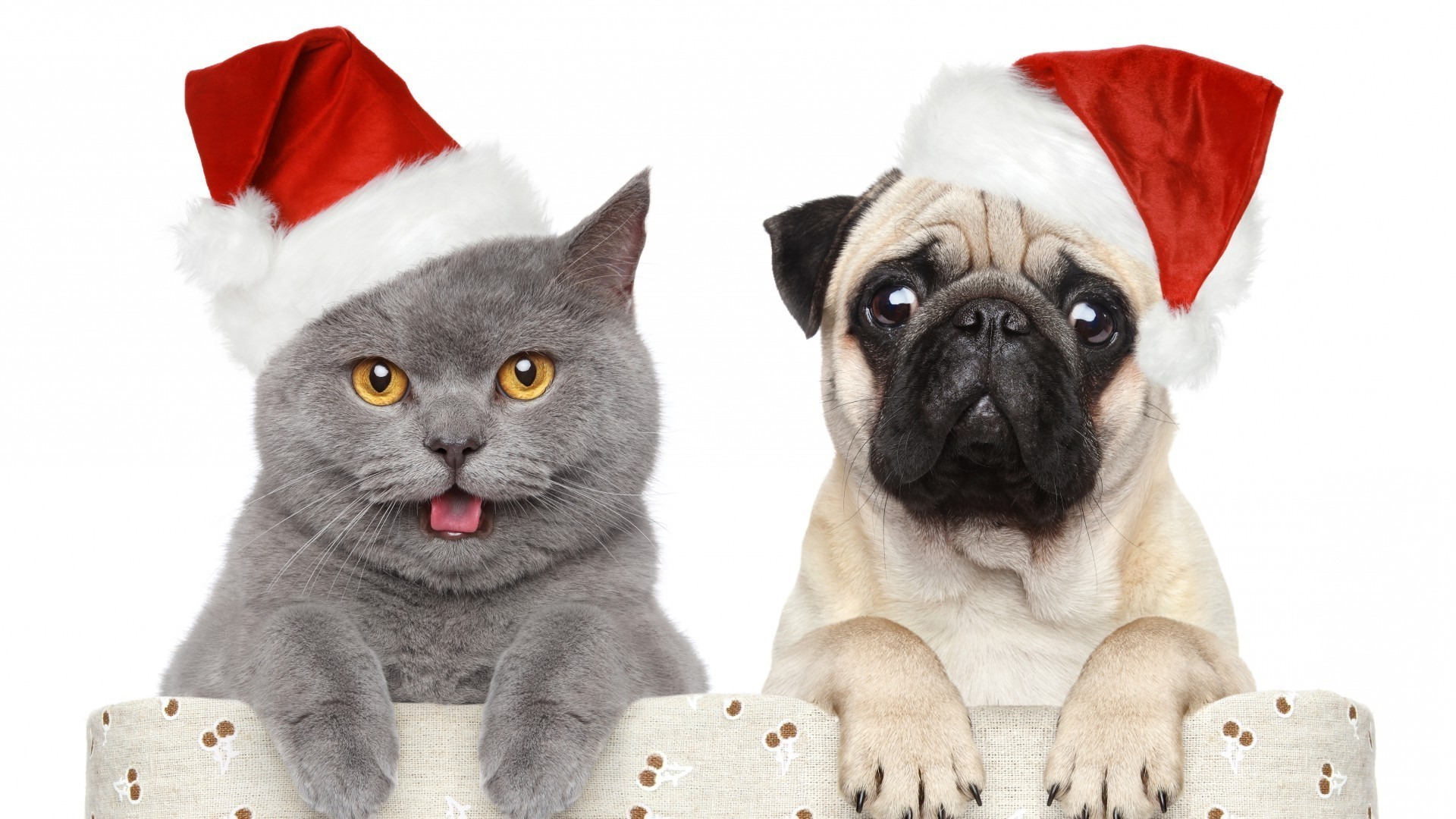 cat and dog meet the new year android wallpapers for free