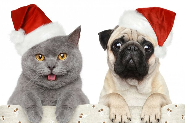 Cat and dog meet the new year