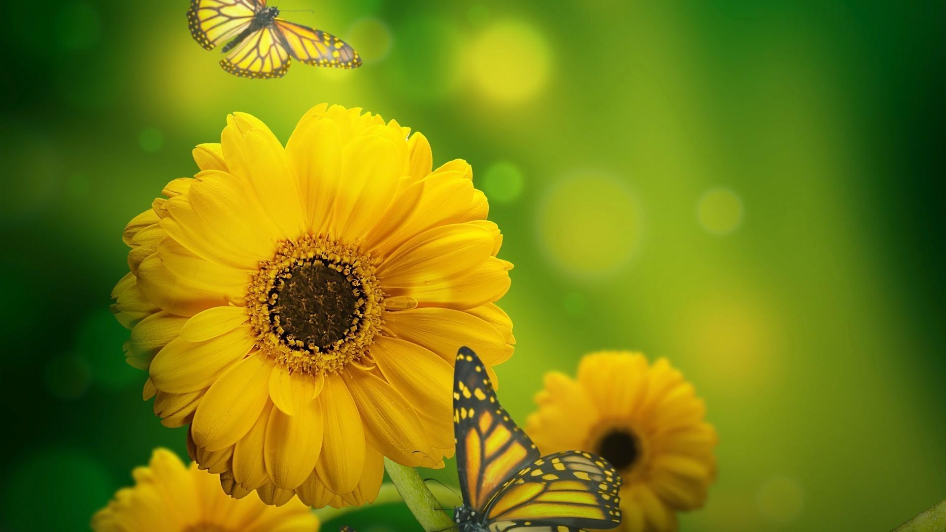 природа макро бабочка цветы желтые  № 1238506 без смс