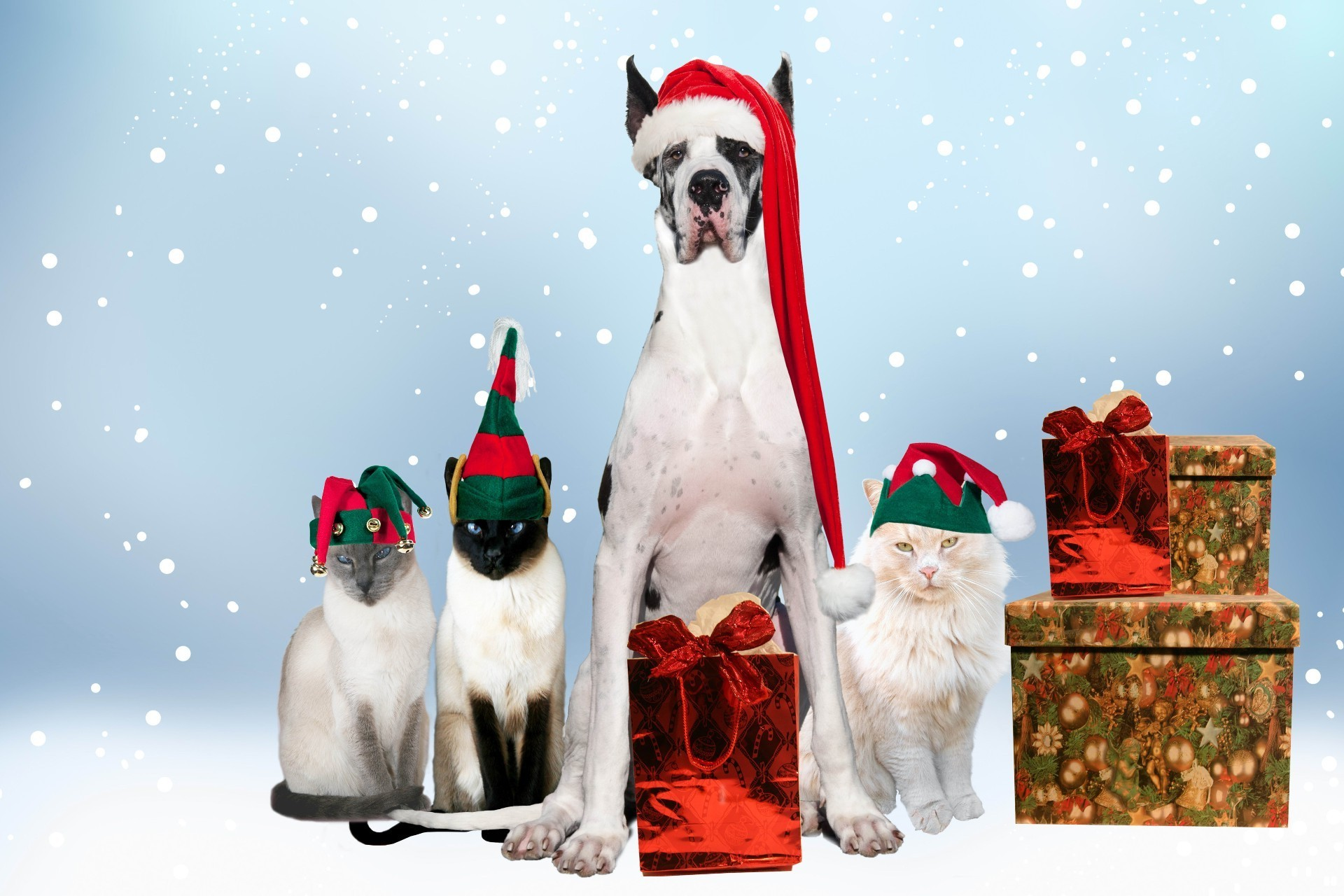 a big dog next to cats and christmas gifts iphone wallpapers for free