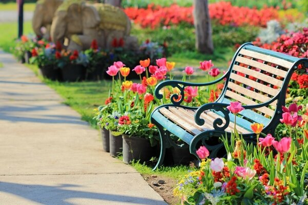 Bench in the Park among the flowers