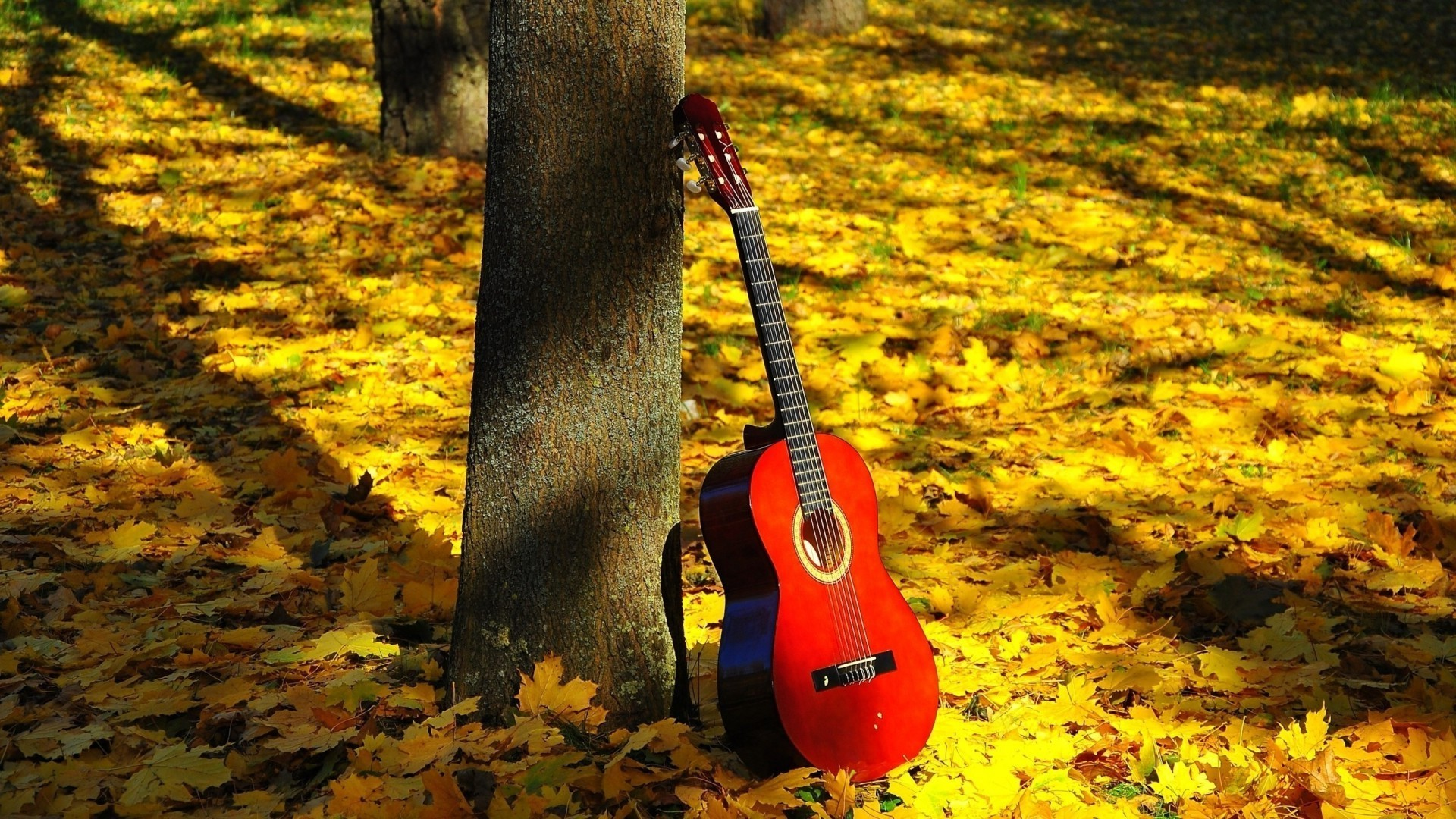 musical instruments wood fall nature outdoors leaf tree park season one daylight