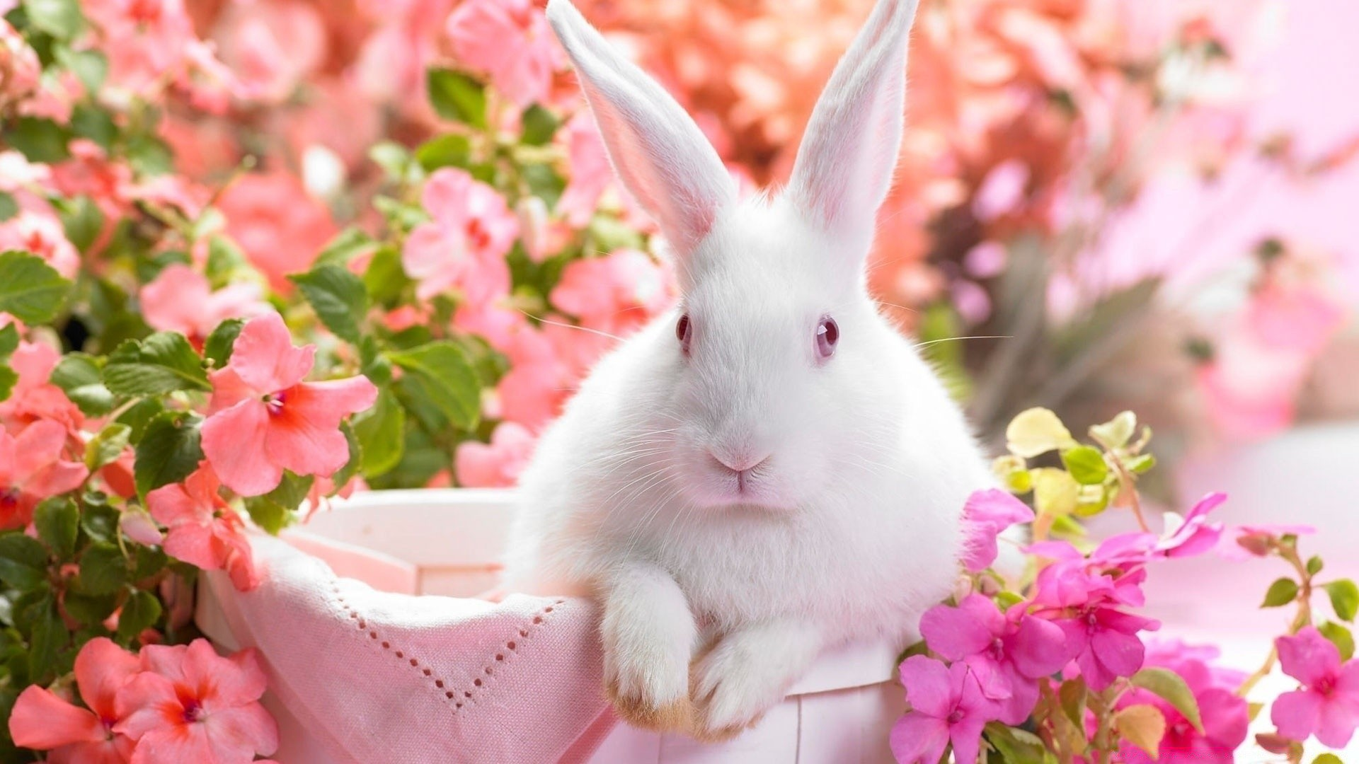 Cute Easter Bunny Desktop Wallpapers For Free