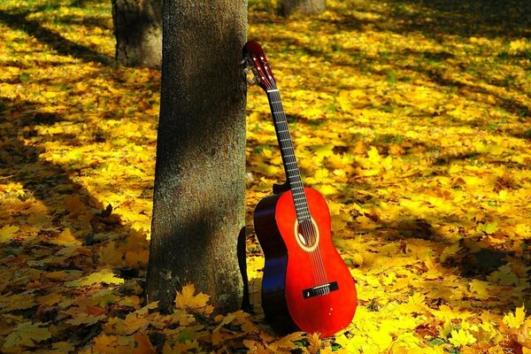 Guitar the tree