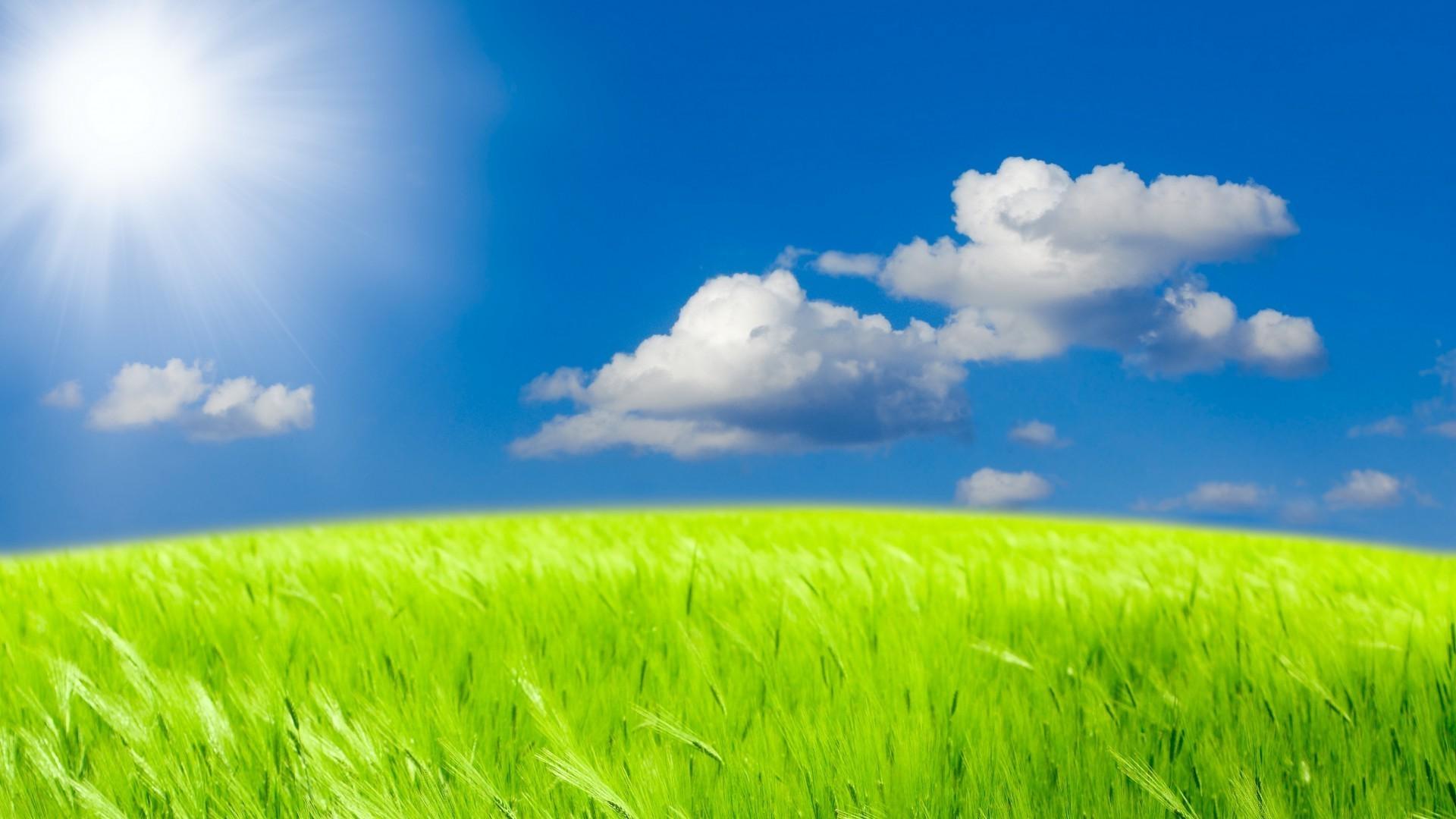 поле травы обои на рабочий стол № 31424  скачать