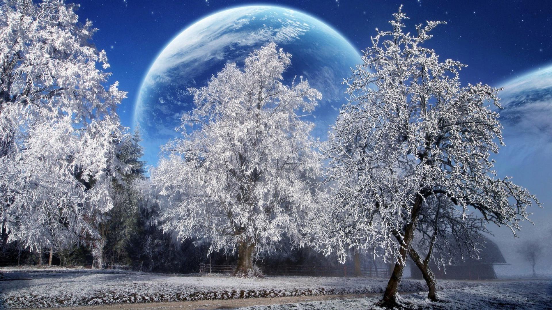 обои зима и животные на рабочий стол скачать бесплатно