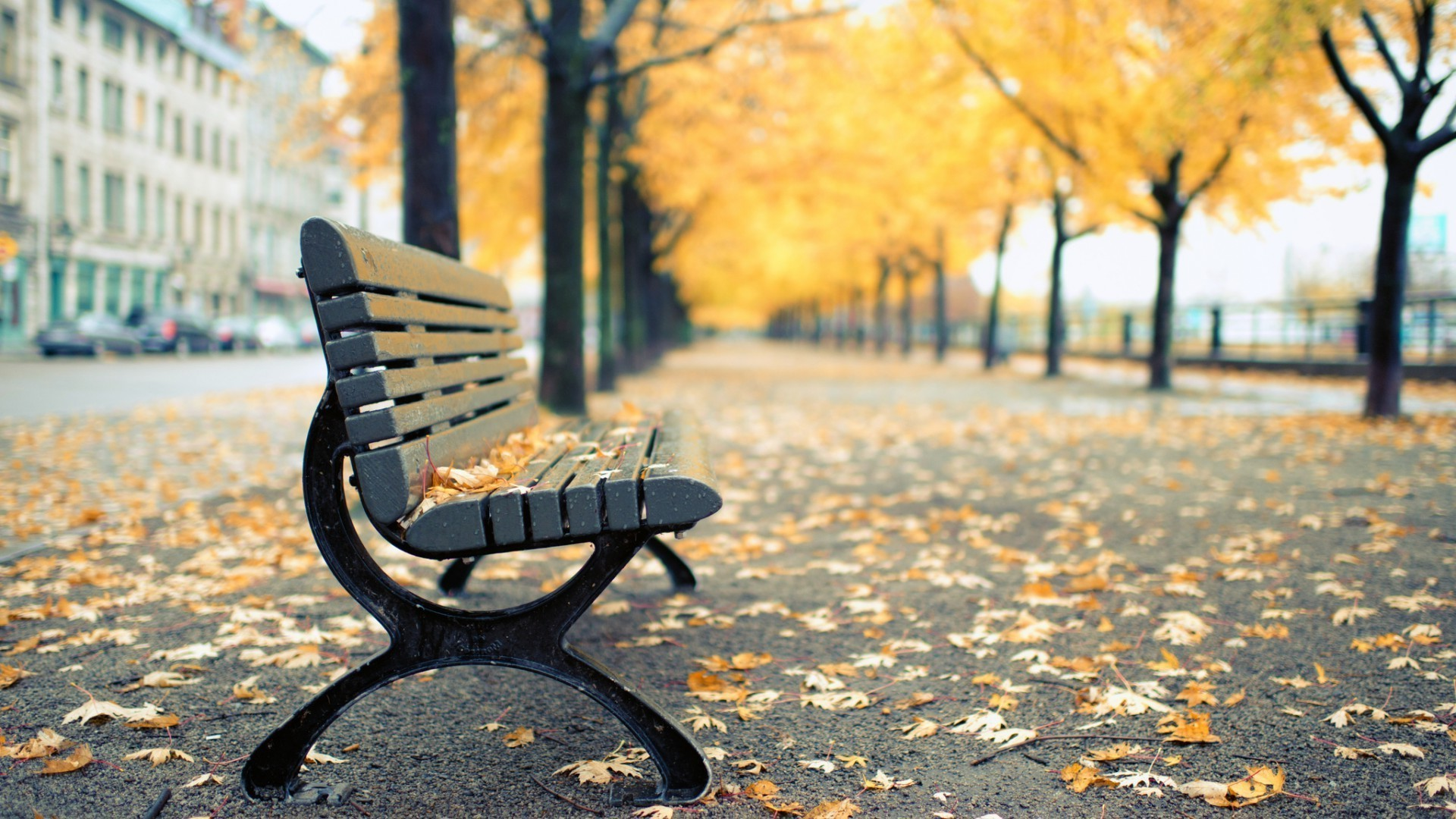 Bench, trees, fallen leaves