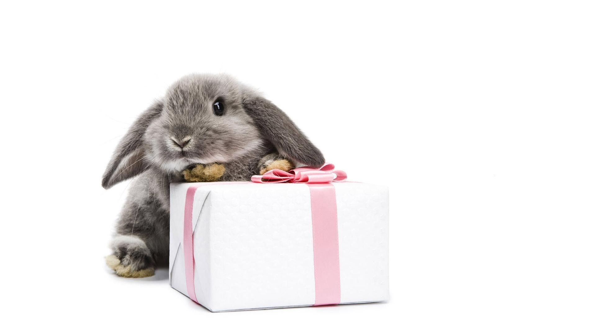 rabbits cute isolated little animal funny pet studio
