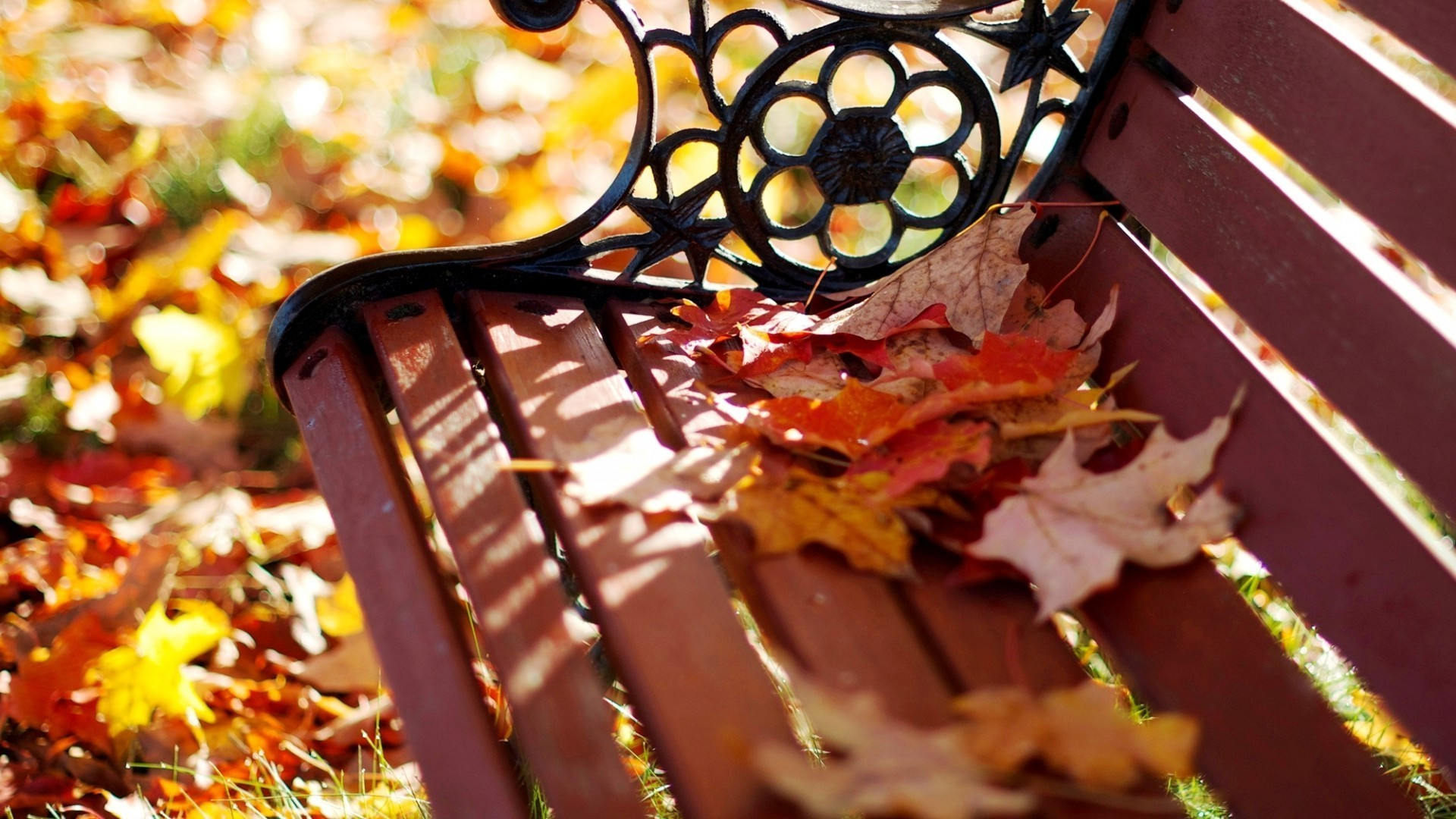 Bench with autumn leaves