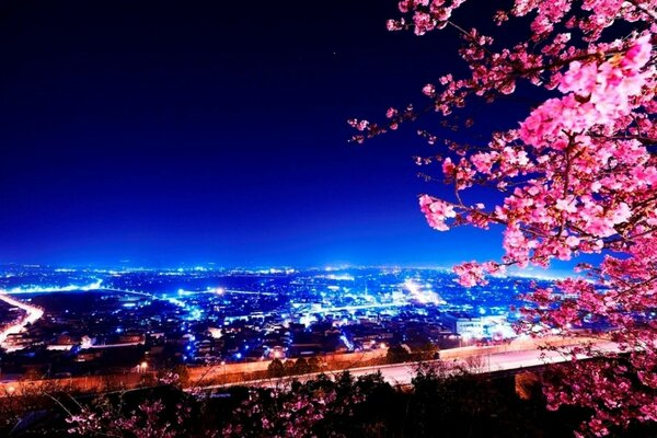 Sakura and night city