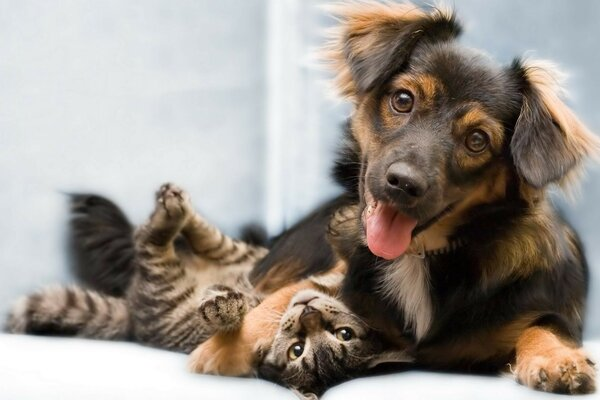 Dog and cat play