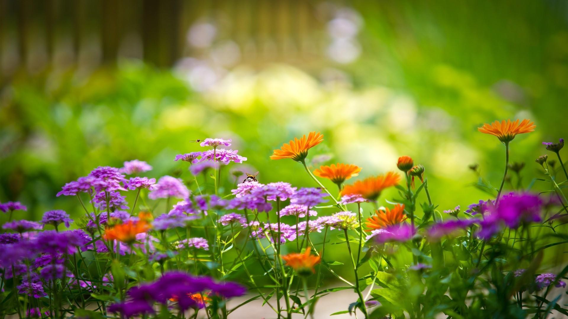 Лавочки отдых под деревом полевые цветы без смс