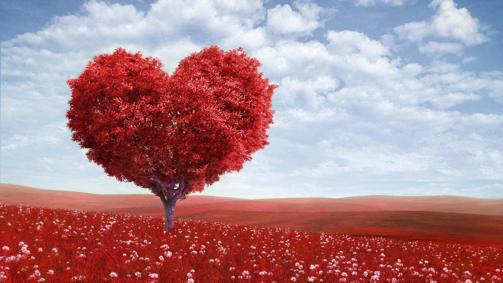 Сердце дерево поле красное без регистрации