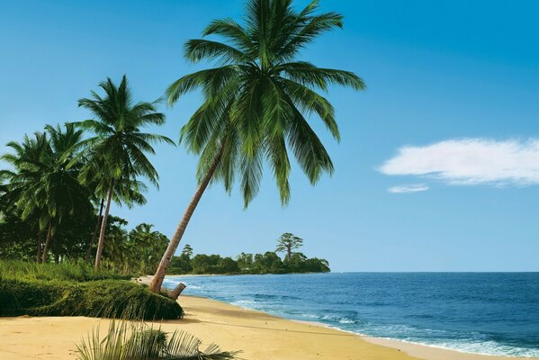 The coast of a tropical island with palm trees