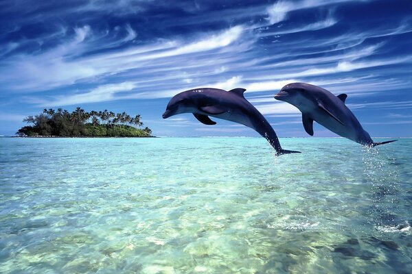 A pair of dolphins diving together in the ocean