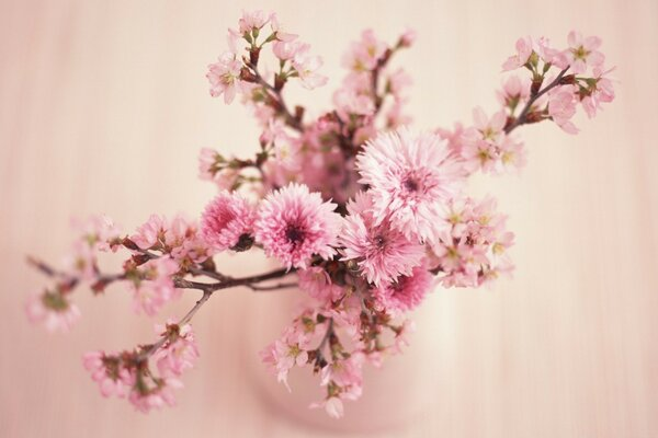 Blossom Branches In Vase