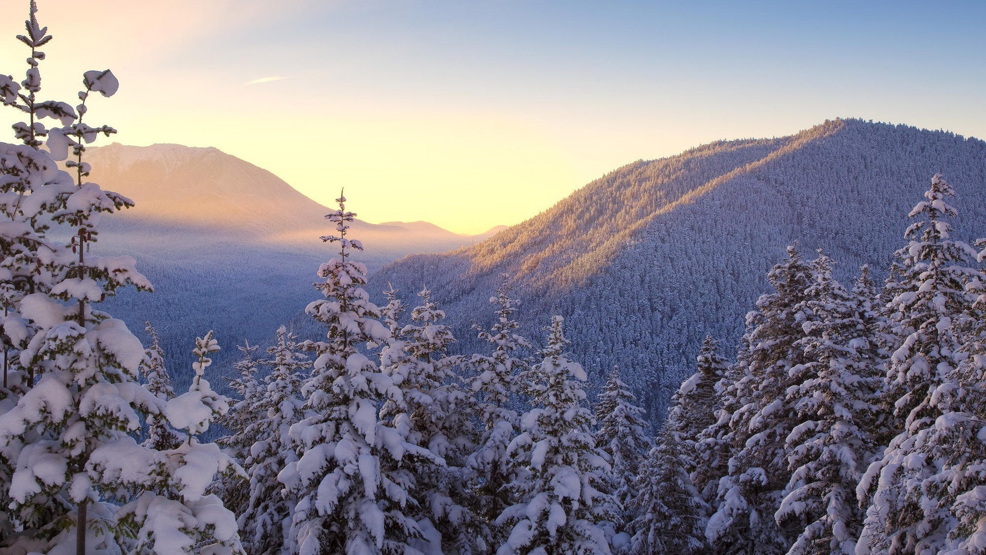 Snow-covered spruce trees, mountains, sunrise