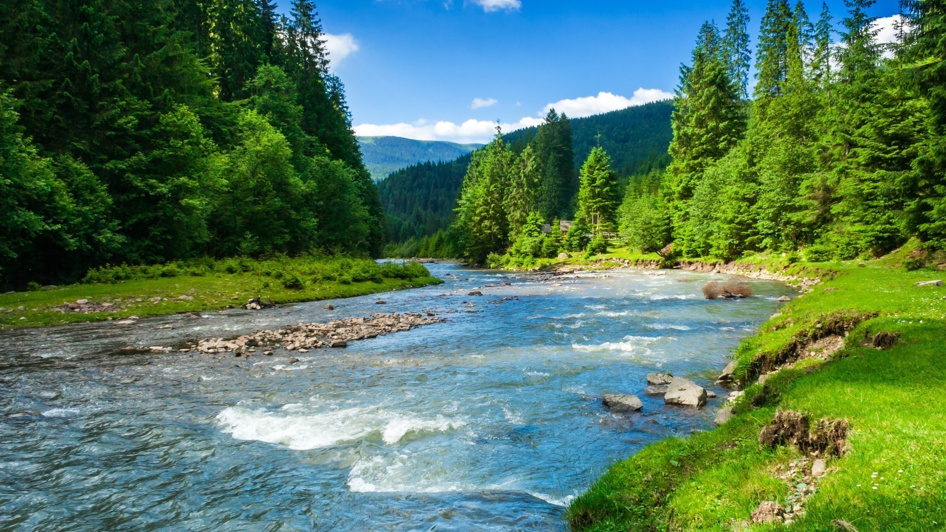 River, sun, greenery, trees. Android wallpapers for free.