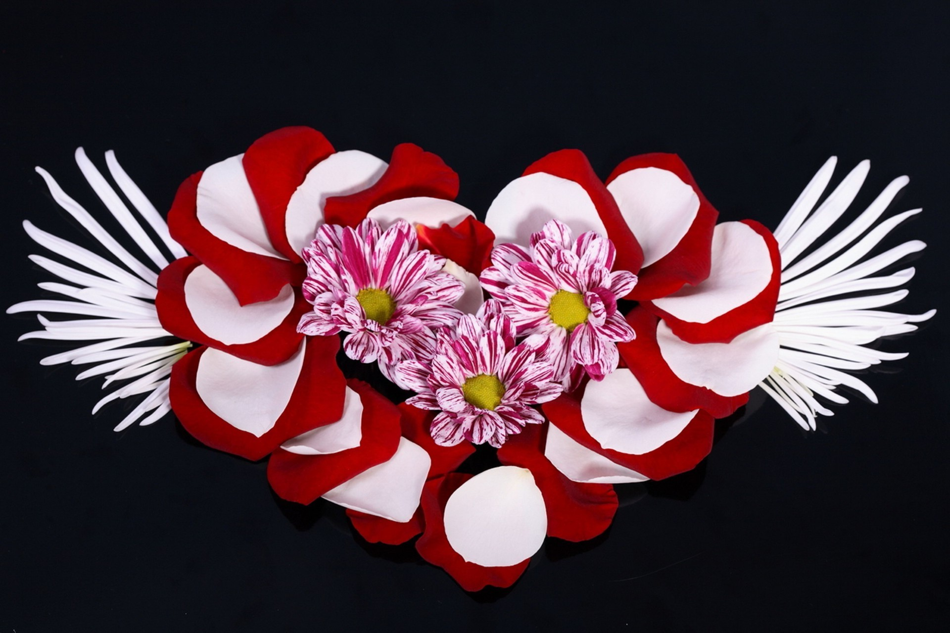hearts flower gift love beautiful decoration celebration petal desktop nature flora romantic floral romance color blooming bright