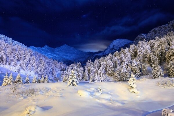 Night, winter, trees, mountains