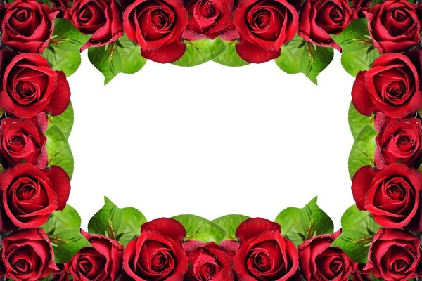 Frame of red roses