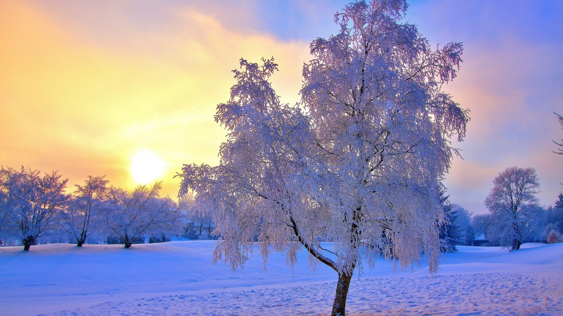 winter tree snow season cold frost landscape dawn branch frozen wood fair weather nature scenic weather park ice sun
