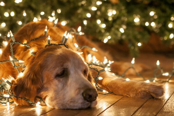 The dog and garland