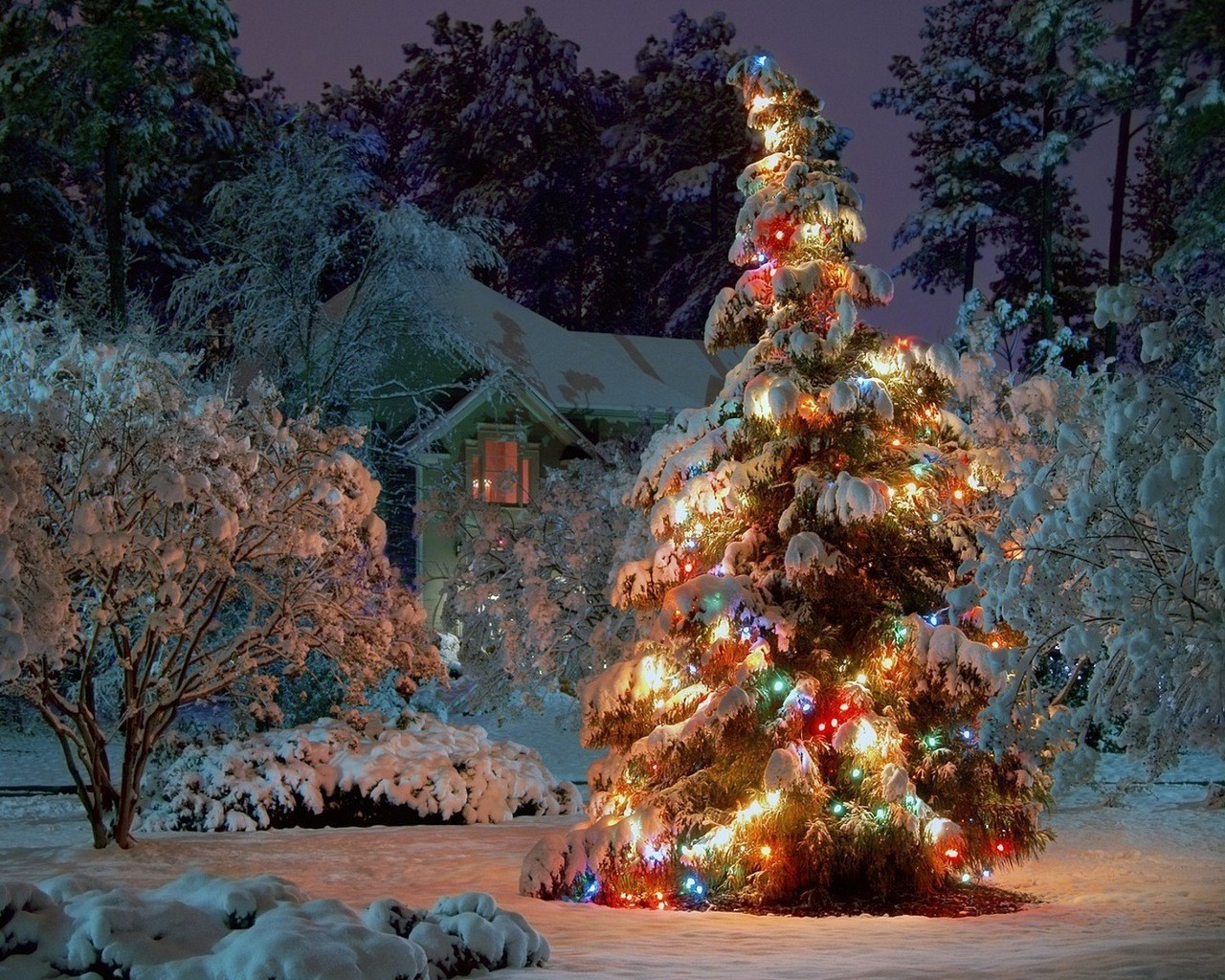 new year winter tree christmas snow outdoors traditional travel