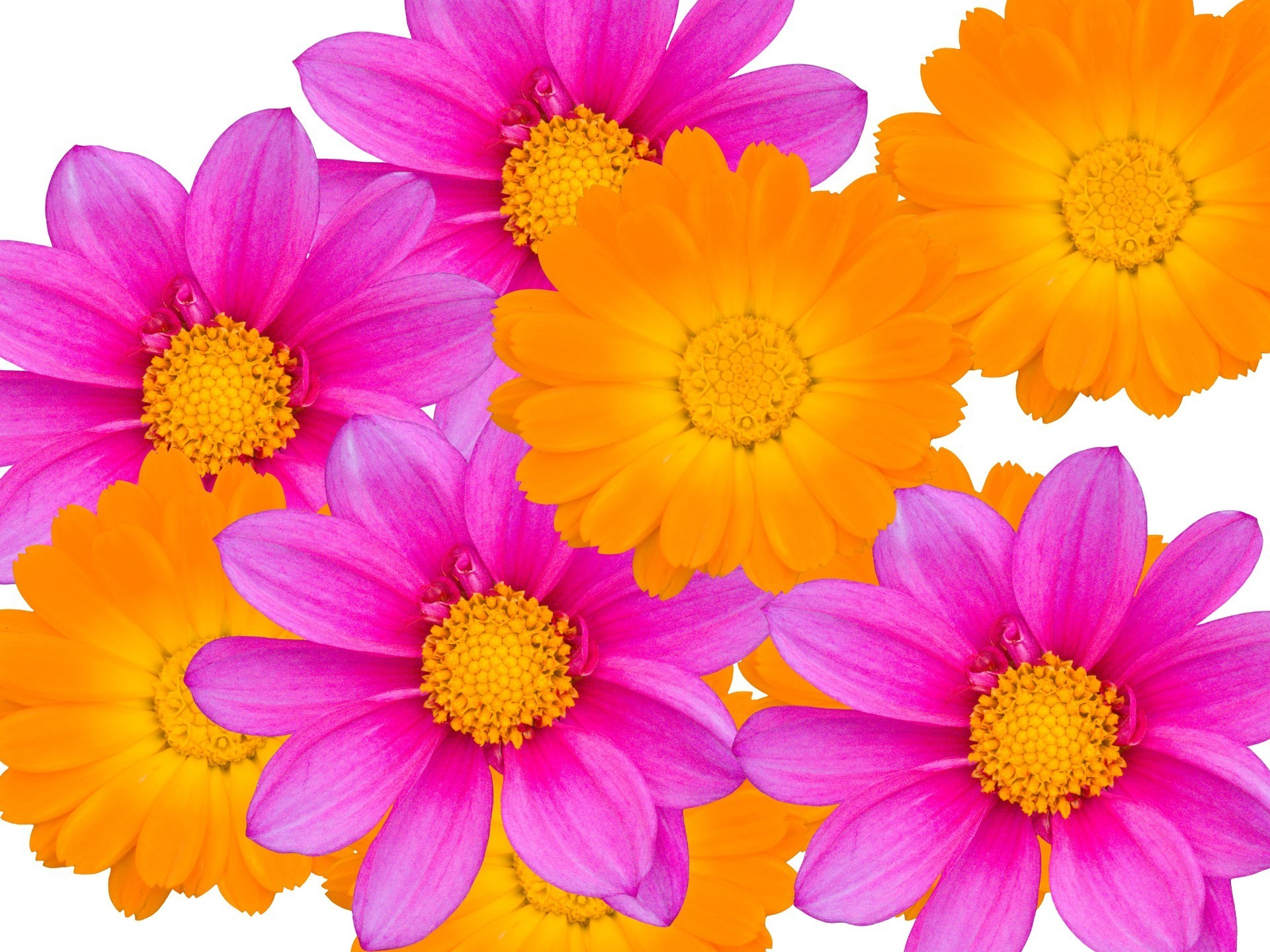 Pink and orange flowers android wallpapers for free mightylinksfo
