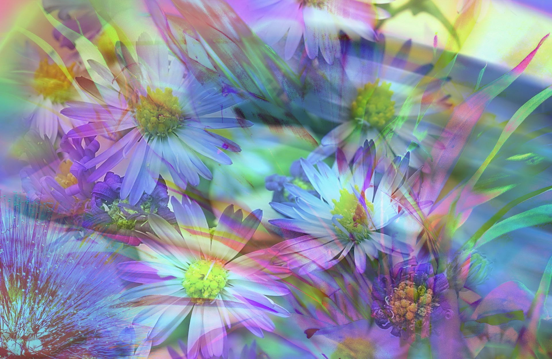 abstract and graphics flower nature flora floral color garden beautiful summer blooming petal bright bouquet vibrant leaf season decoration botanical hayfield field
