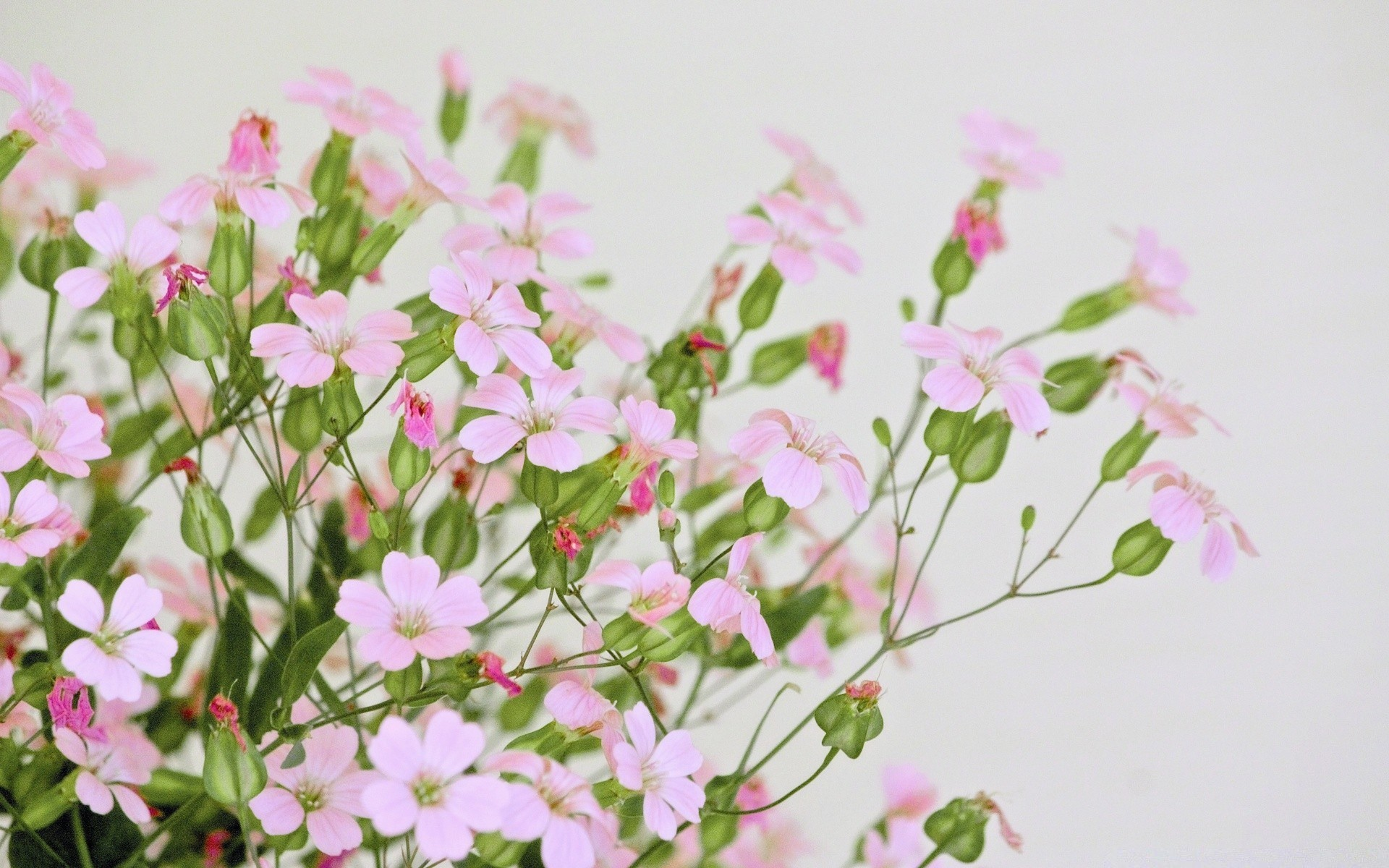 Cute pink flowers android wallpapers for free mightylinksfo