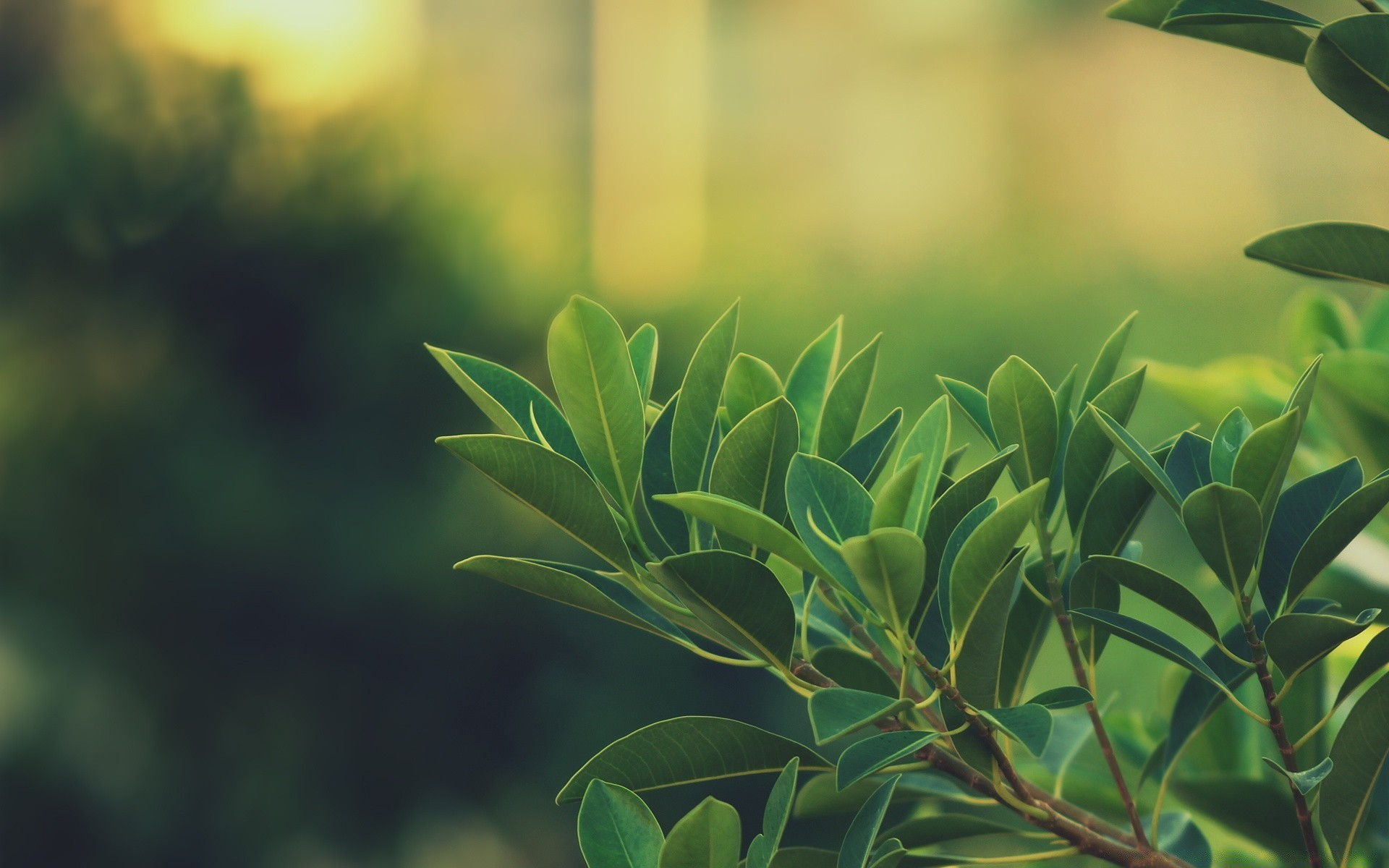 Зелень деревья листва без смс
