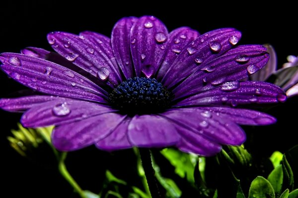 Beautiful Purple Flower