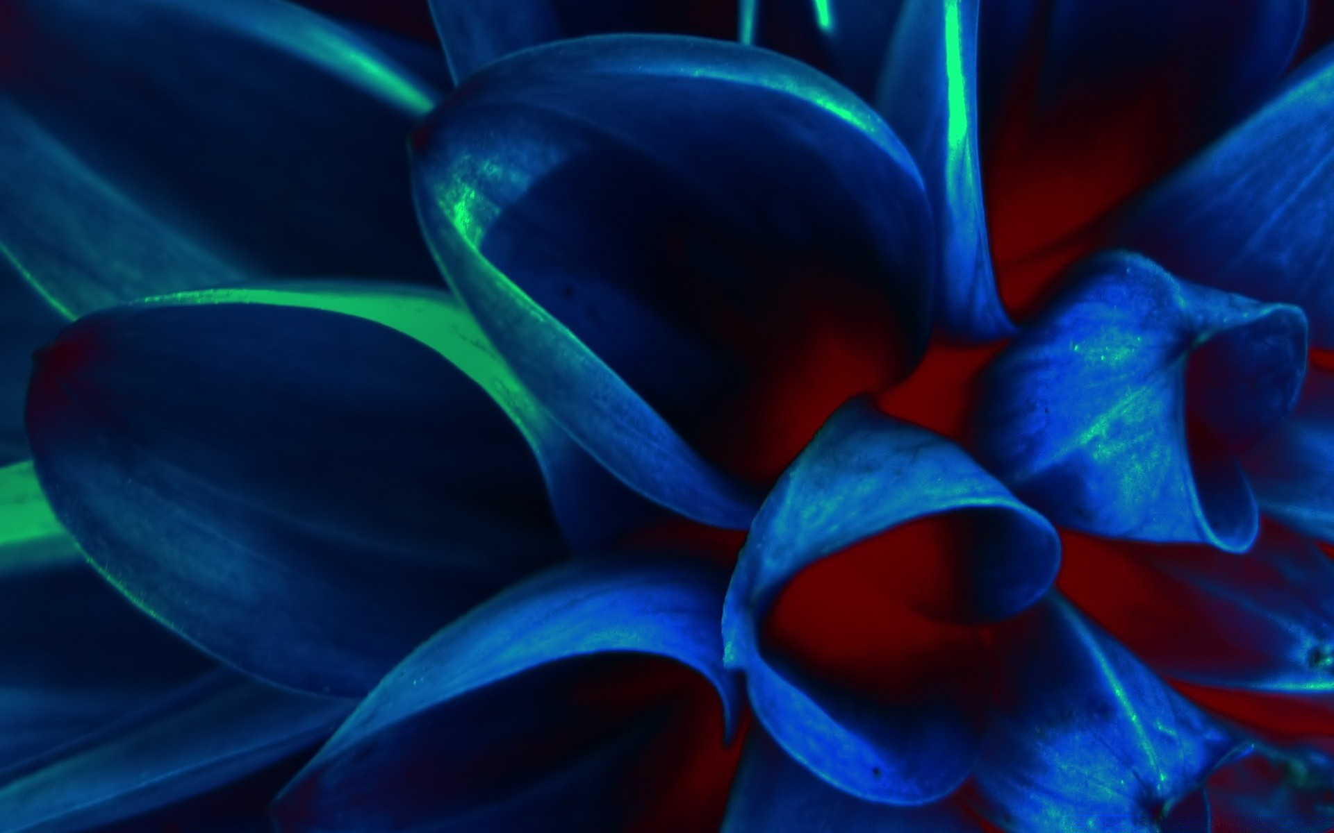 Blue flower petals macro iphone wallpapers for free izmirmasajfo
