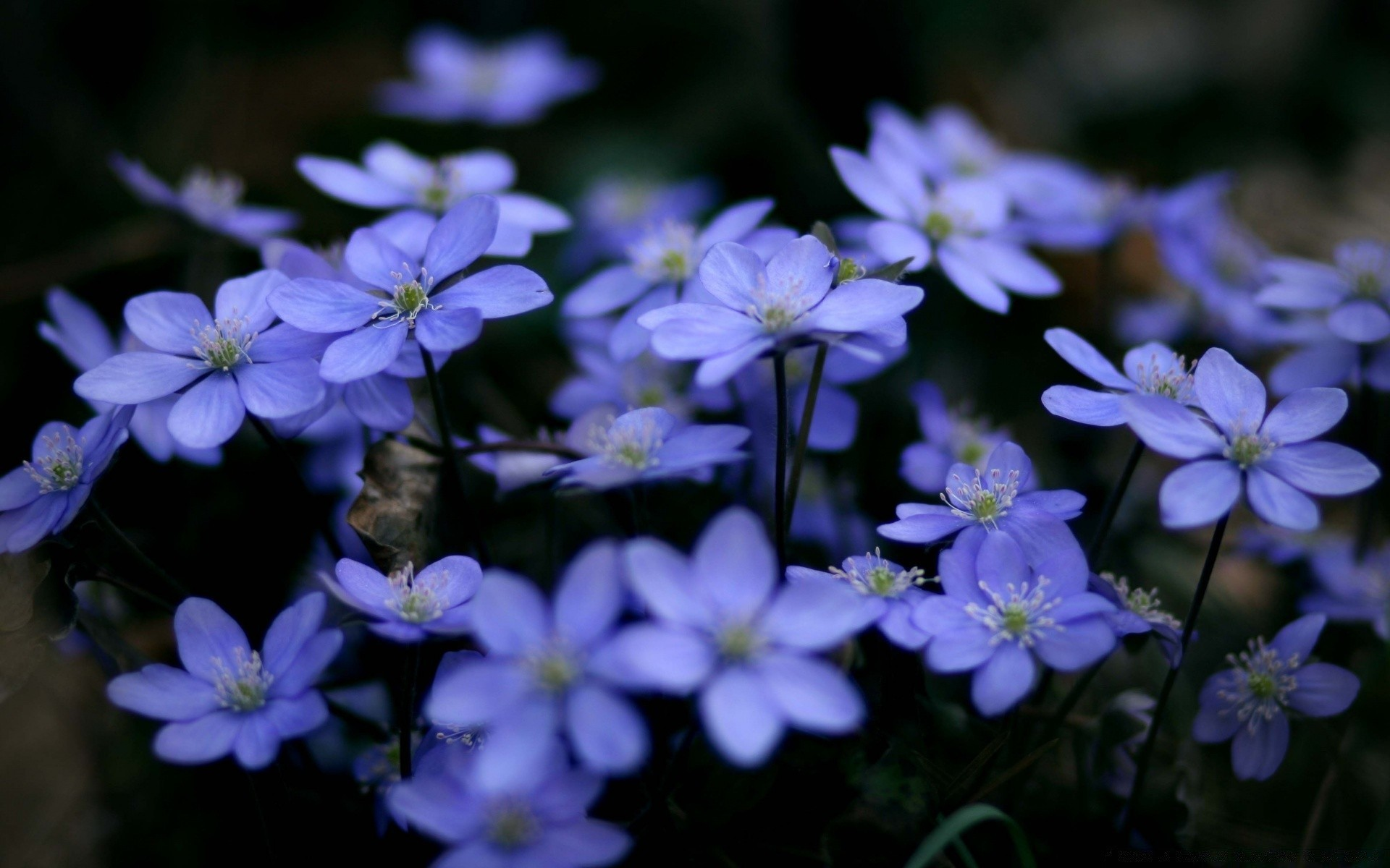 Small Blue Flowers Android Wallpapers For Free