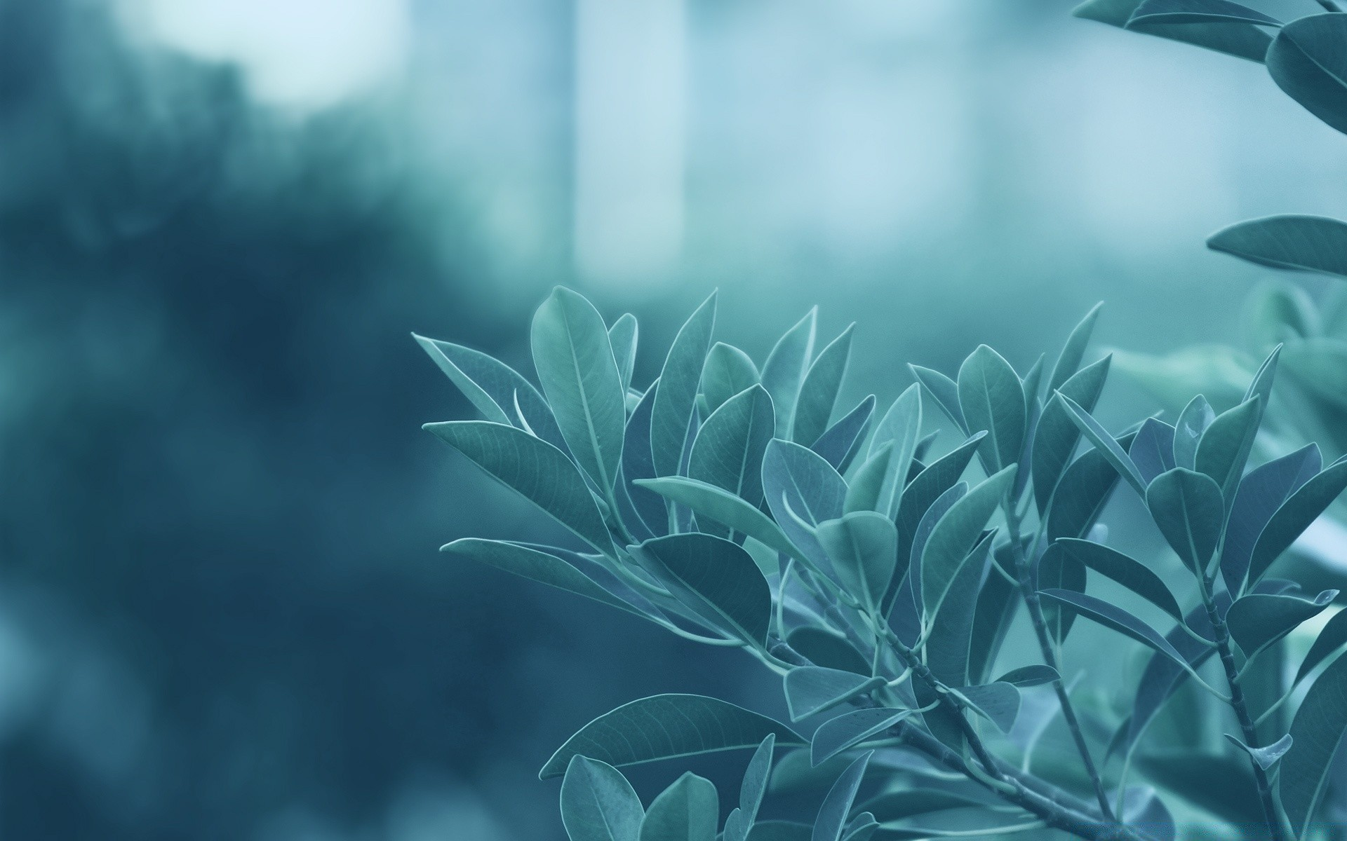 Blue Leaves IPhone Wallpapers For Free