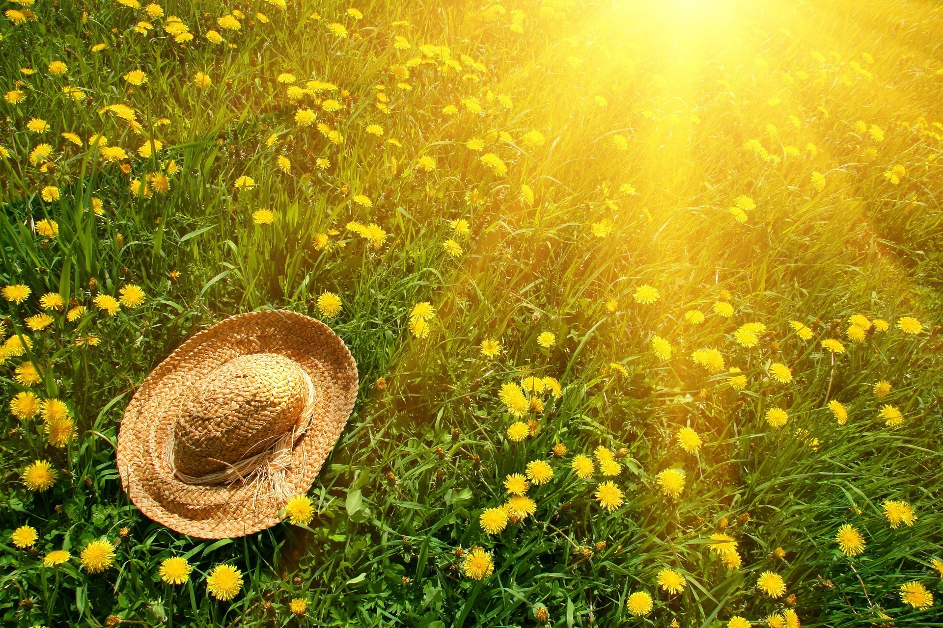 Wicker hat on the grass with yellow dandelions