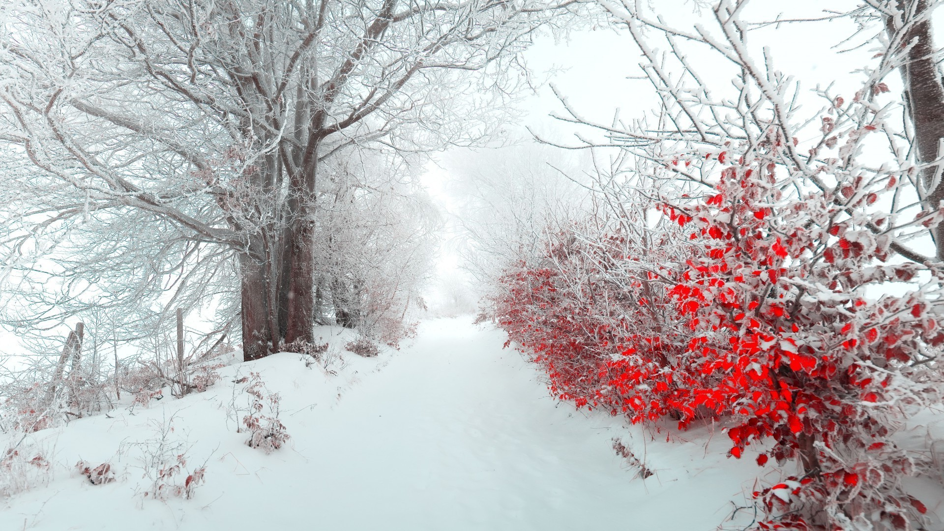 Обои для рабочего стола ранняя зима природа