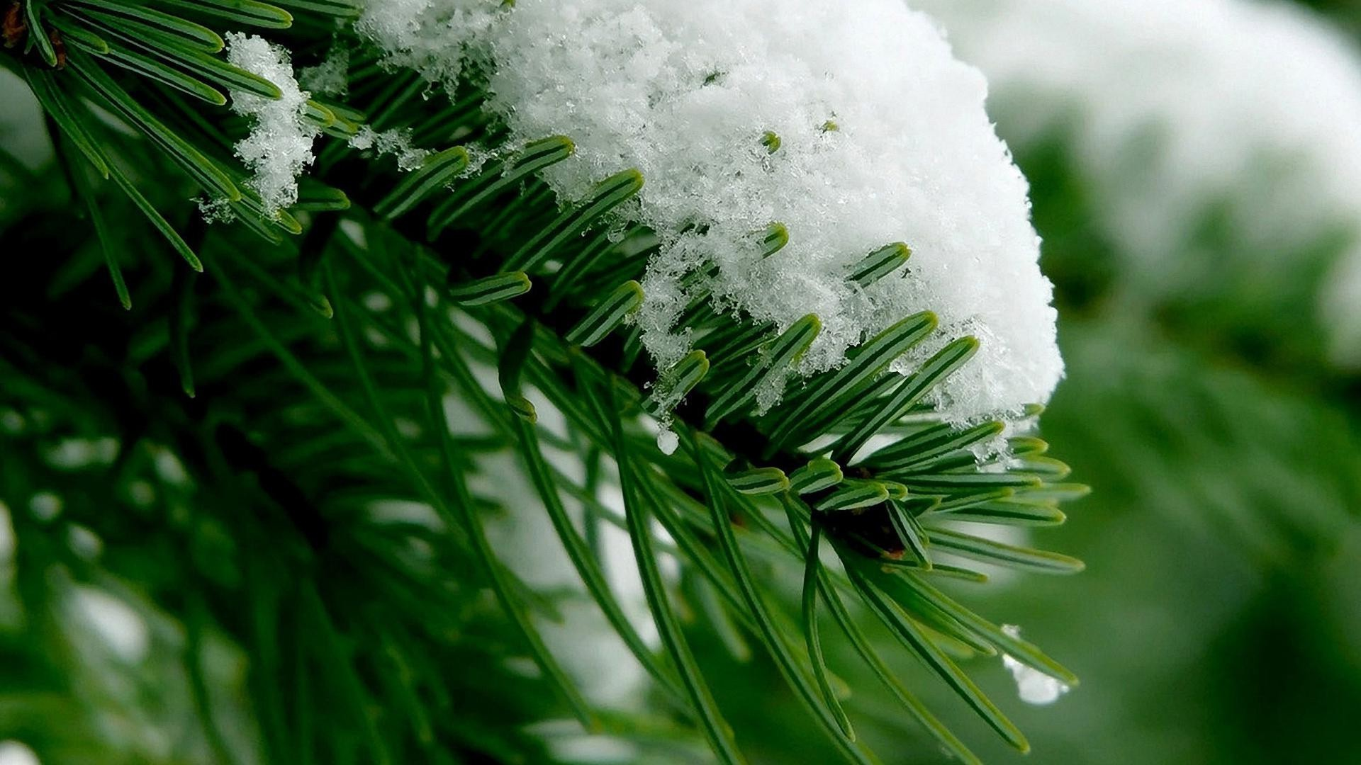 plants winter christmas tree evergreen blur celebration season nature decoration snow pine leaf bright needle close-up light outdoors conifer flora