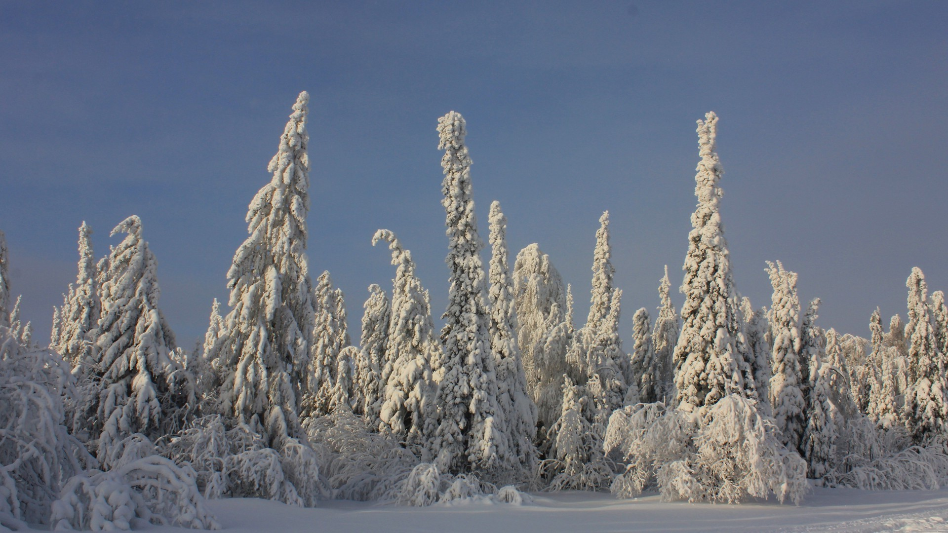 winter snow frost cold ice nature frozen wood landscape outdoors sky tree
