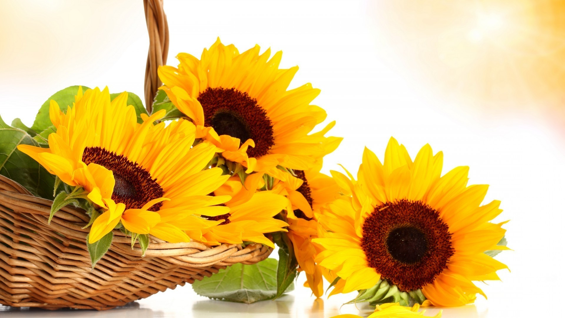 Yellow Flowers In A Basket Free Wallpapers